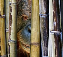 Behind Bamboo by JulieM