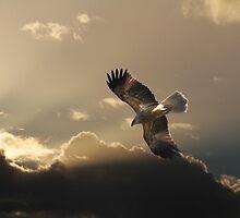 Whistling Heaven by byronbackyard