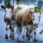 Gethering the cows in Canton Bern - Swiss by RAN Yaari