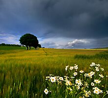 Barley Field  by John Ellis