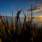 Reeds by Adriano Carrideo