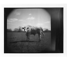 Instant Cow Photographic Print