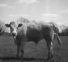 Instant Cow Sticker