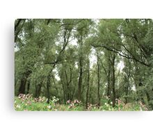 Willow forest Canvas Print