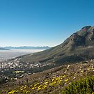 The Mother City by Anna Phillips