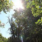 Shining Sun by theartguy