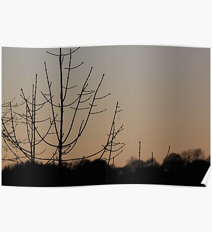 Tree Silhouette Poster