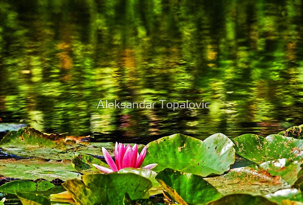 Water Lilies by Aleksandar Topalovic