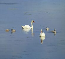 The Progress Of The Swan Family by Fara