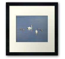 The Progress Of The Swan Family Framed Print