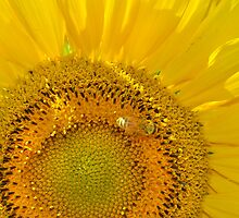 Sun Burst by Corinne Noon