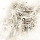 Dandelion Seeds by Ellesscee
