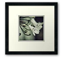 Agapanthus Flowers Framed Print