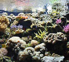reef by heartoftheocean