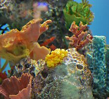 coral reef by heartoftheocean