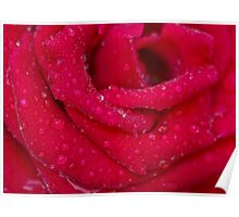 Luscious Rose Poster
