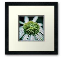 Echinacea Flower Framed Print