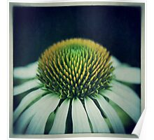 Echinacea Flower Poster