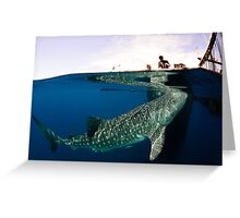 The Whalesharks of Indonesia Greeting Card