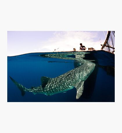 The Whalesharks of Indonesia Photographic Print