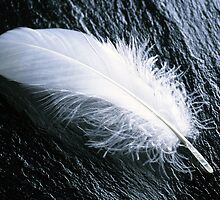 White feather  by franceslewis