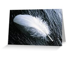 White feather  Greeting Card