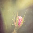 Vintage Rose by cmcdonald