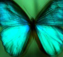Butterfly Sample by artyamie