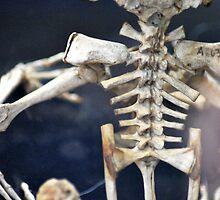 Frog Skeleton by artyamie