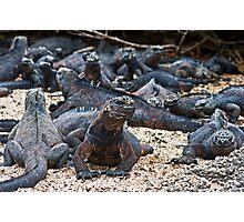 Marine Iguanas4 Photographic Print