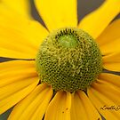 Yellow Sunburst by Lorelle Gromus
