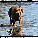 Water Dog by AngieBanta