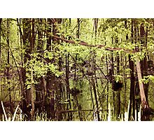 Healy Lake Swamp Photographic Print