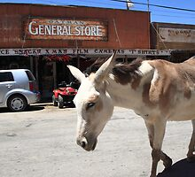 Route 66 - Oatman Arizona by Frank Romeo