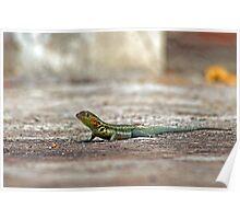 Lava Lizard Poster
