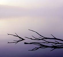 Misty Sunset Reflections by Julien Johnston