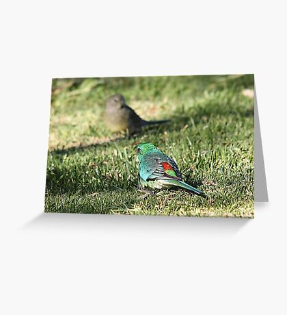 Red-rumped Parrot - male and female Greeting Card