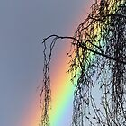 A Rainbow to Heaven by Maureen Johnston