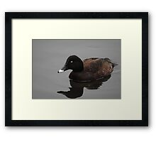 Reflection of Hardhead Duck (Aythya australis) #2 - Mill Park, Victoria Framed Print