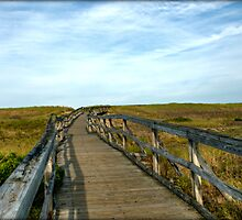 Plum Island Boardwalk by Monica M. Scanlan