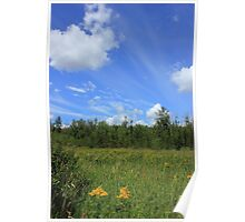 Summer meadow with wildflowers and sky Poster
