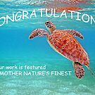Congratulations by globeboater