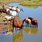Horse Family by globeboater