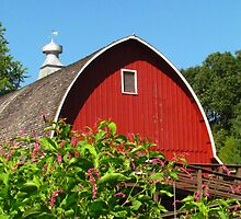 Barn Under Blue Skies by lorilee