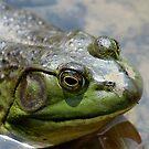 Frog Eyes by Rosanne Jordan