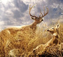 Buck and Doe in Grassland by Norman Rawn