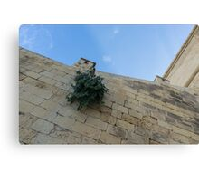 Life on Bare Rock - Up on the Citadel Wall in Victoria, Gozo Metal Print