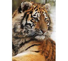 Cute Cub Photographic Print
