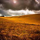 Rolled Gold by Trevor Middleton