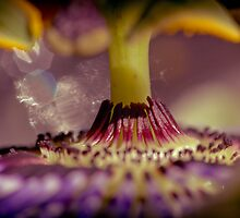 Worship Thou Maker by Photography1804